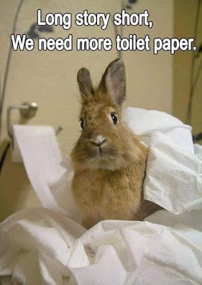 Long story short we need more toilet paper Rabbit Memes