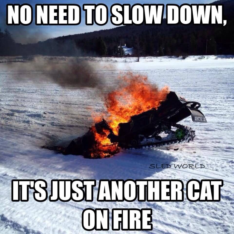 No need to slow down it's just another cat Sled Meme
