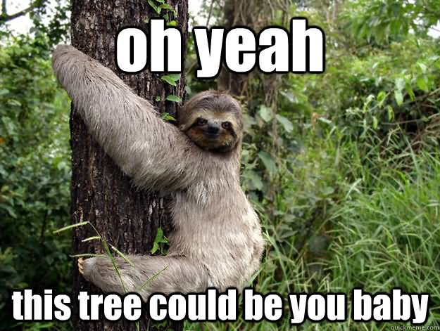 Oh yeah this tree could be you baby Tree Memes