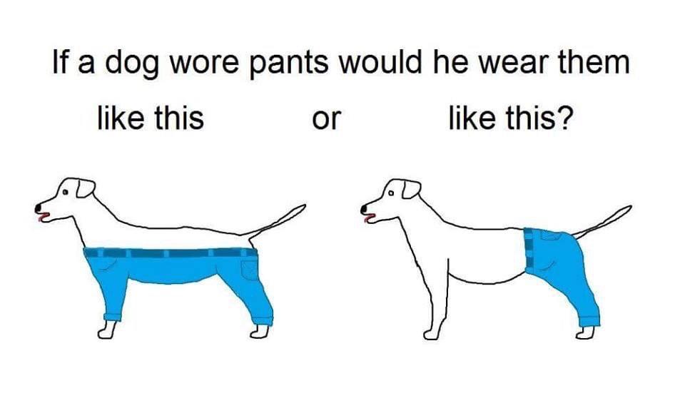 Pants Meme If a dog wore pants would he wear
