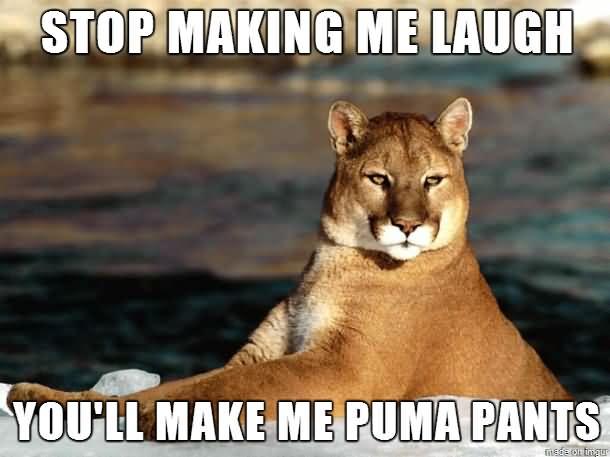 Pants Meme stop making me laugh you'll make me puma pants