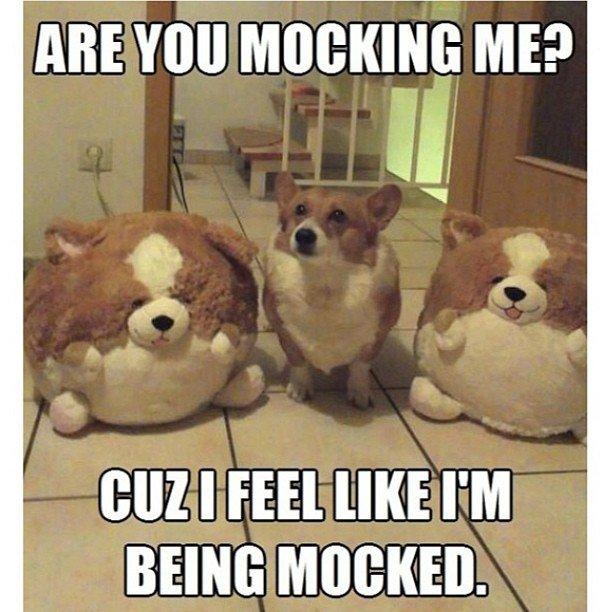 Pet Memes Are you mocking me cuz i feel like