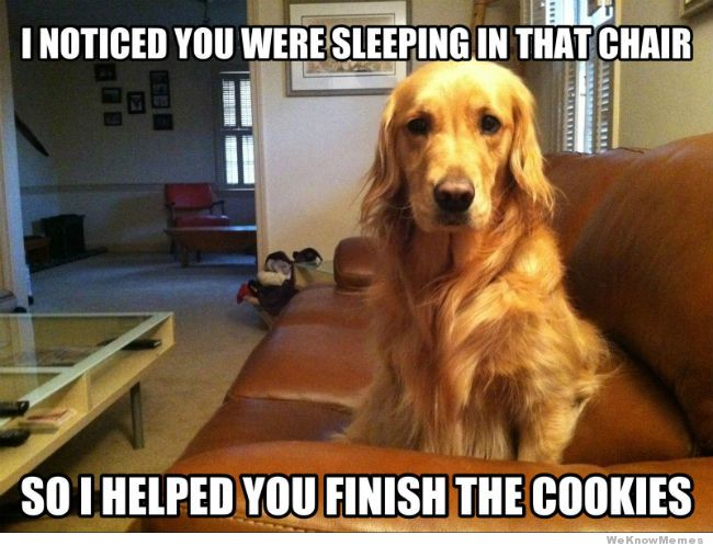 Pet Memes I noticed you were sleeping in that chair