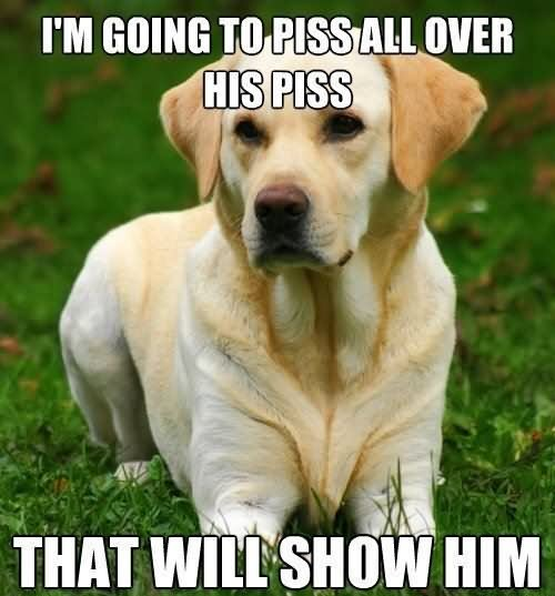Pet Memes I'm going to piss all over that will show him