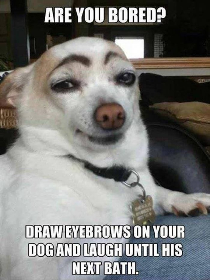 Pet Memes are you bored draw eyebrows on you dog