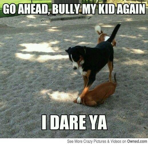 Pet Memes go ahead bully my kid again i dare ya