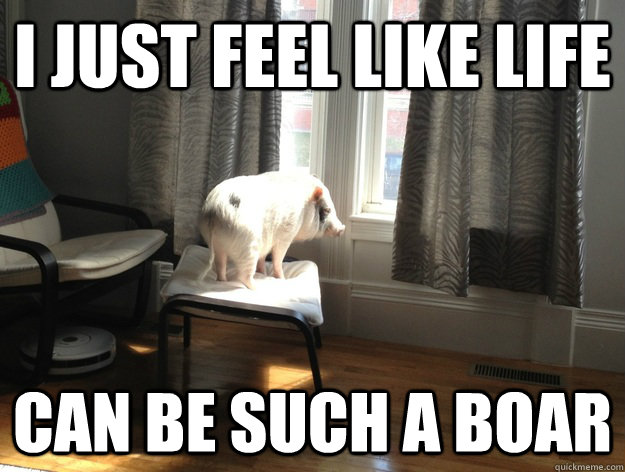 Pigs Meme I just feel like life can be such a boar