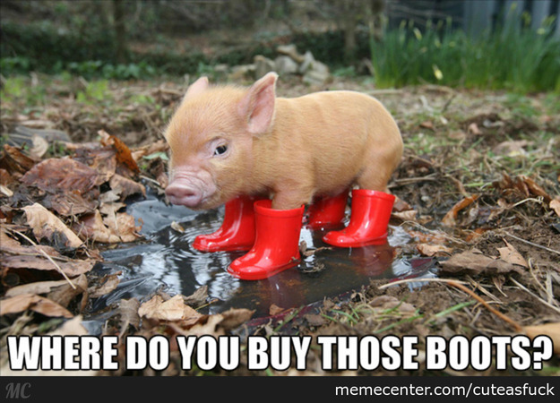 Pigs Meme Where do you buy those boots