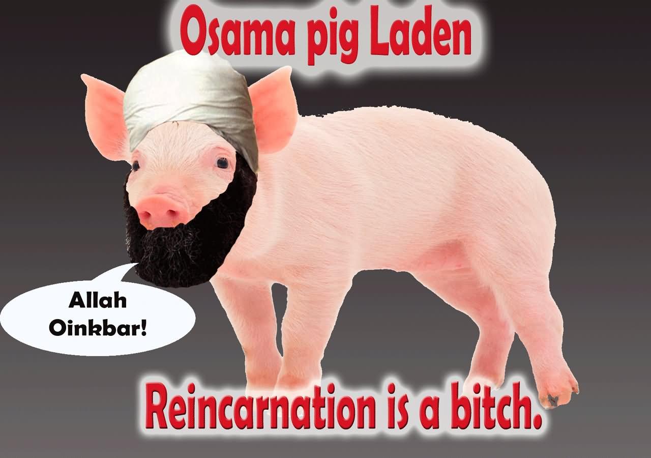 Pigs Meme osama pig laden allah oinkbar reincarnation is a bitch