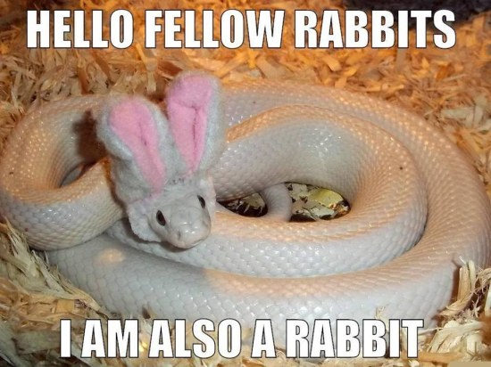 Rabbit Memes Hello fellow rabbits i am also a rabbit