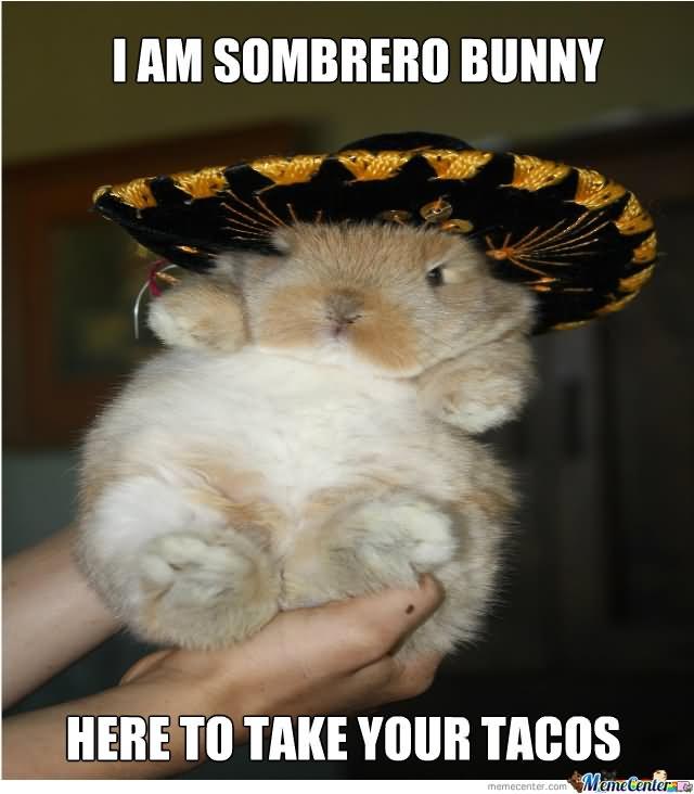 Rabbit Memes I am sombrero bunny here to take your tacos