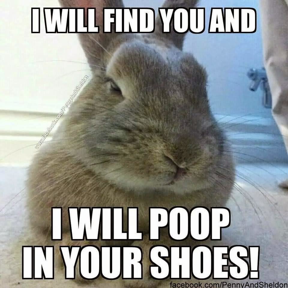 Rabbit Memes I will find you and i will poop in your shoes