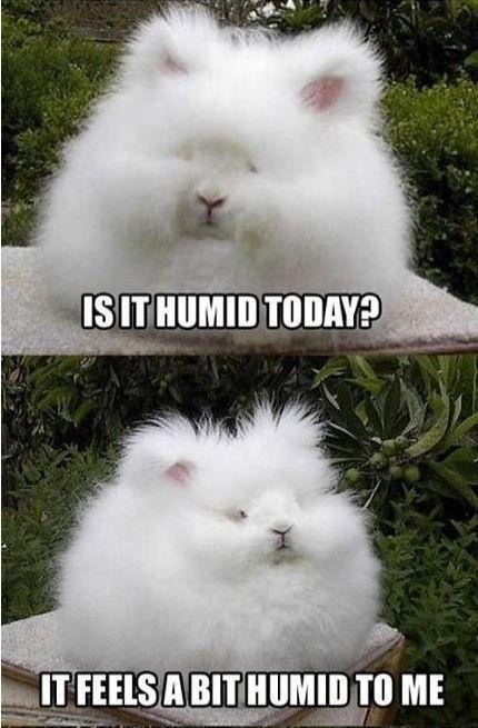Rabbit Memes Is it humid today it feels a bit humid to me