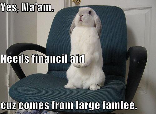 Rabbit Memes Yes ma'am needs financil aid cuz