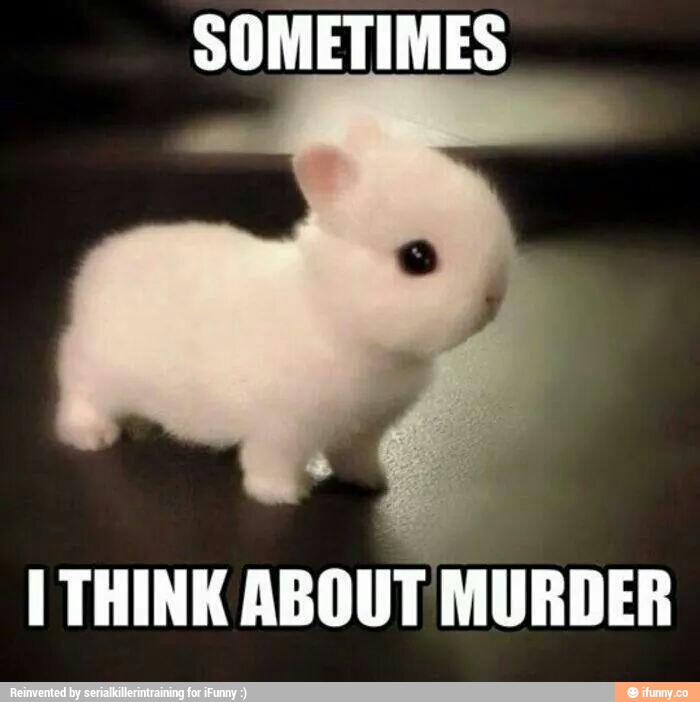 Sometimes i think about murder Rabbit Memes
