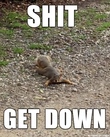 Squirrel Meme Shit get down squirrel meme shit get down picsmine,Get Down Funny Meme