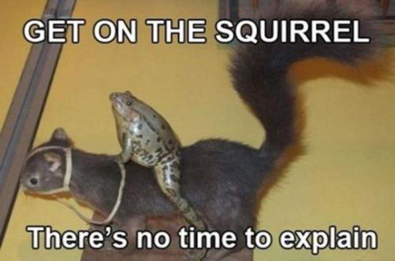 Squirrel Memes Get on the squirrel there's no time to explain