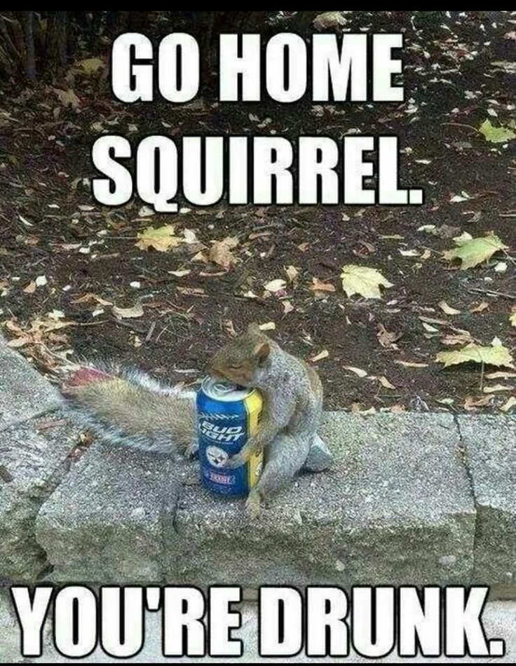 Squirrel Memes Go home Squirrel you're drunk