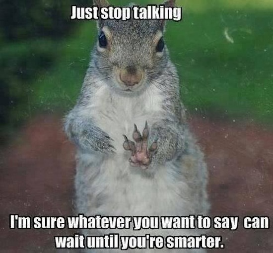 Squirrel Memes Just stop talking i m sure whatever you want to say can