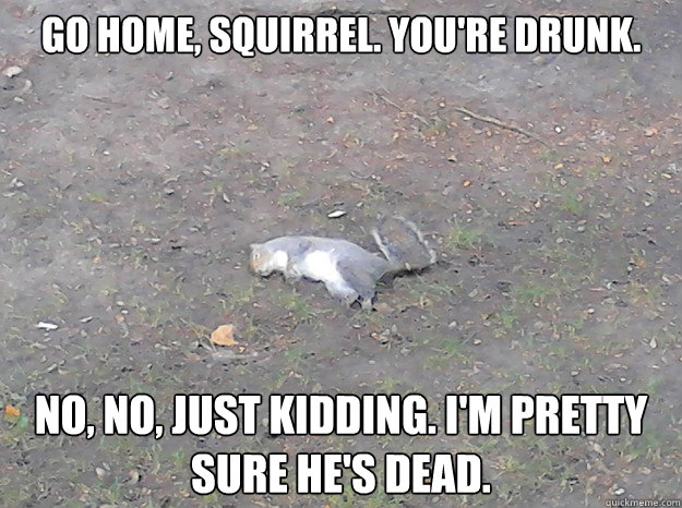 Squirrel Memes go home Squirrel you're drunk no no just kidding I'm pretty