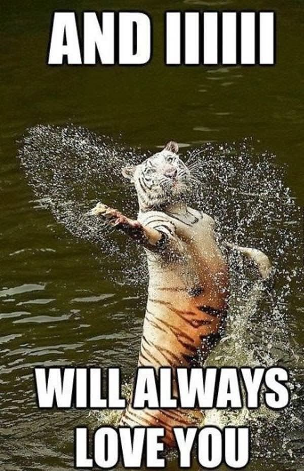 Tiger Meme And iiiii Will always love you