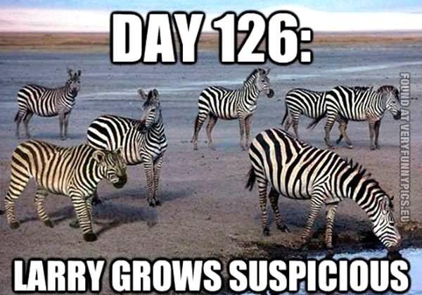 Tiger Meme Day 126 larry grows suspicious