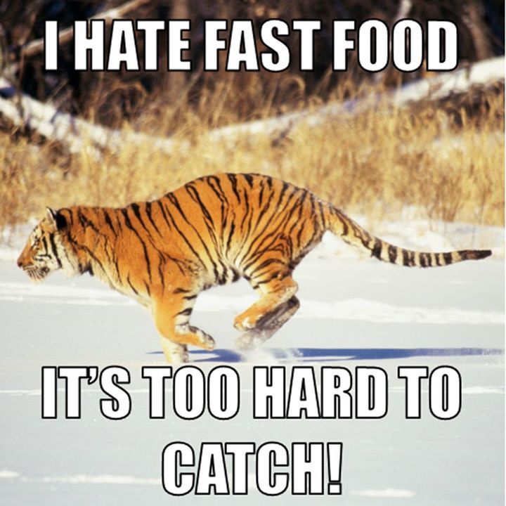 Tiger Meme I hate fast food it's too hard to catch