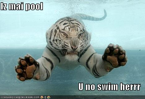 Tiger Meme Iz mai pool u no swin herrr