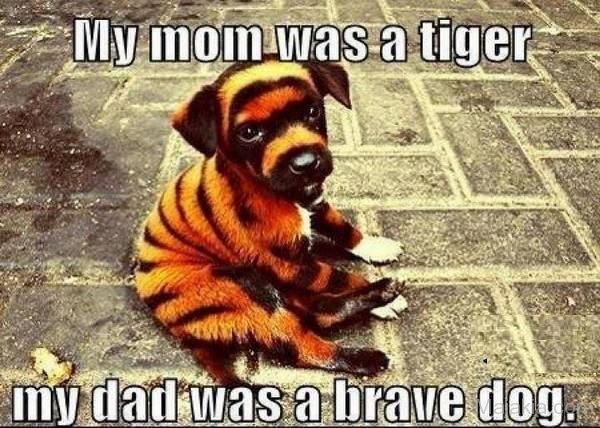 Tiger Meme My Mom was a tiger my dad was a brave dog