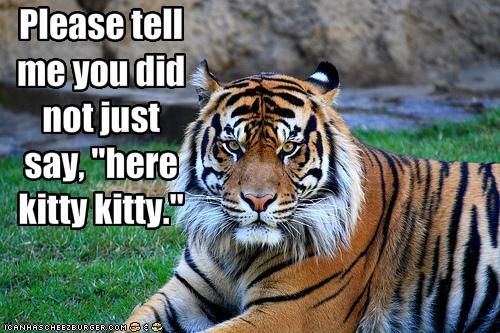 Tiger Meme Please tell me you did not just say here kitty kitty