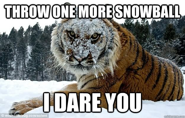 Tiger Meme Throw one more snowball i dare you