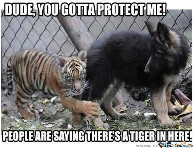 Tiger Meme dude you gotta protect me people are saying