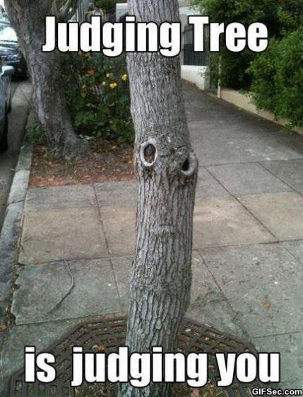 Tree Memes Judging tree is judging you