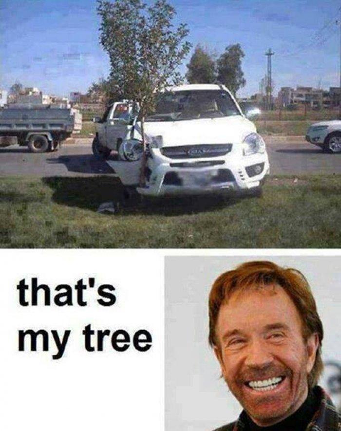 Tree Memes That's my tree