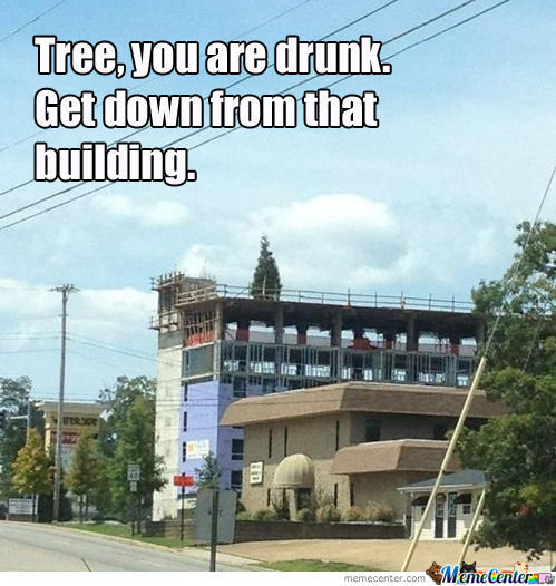 Tree Memes Tree you are drunk get down from that building