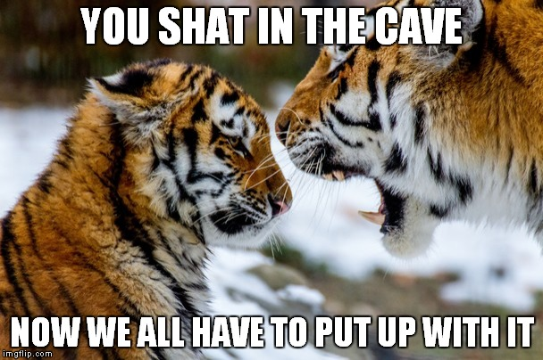 You shat in the cave now we all have Tiger Meme