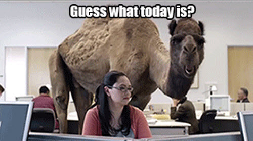 Guesss what today is Hump Day Meme