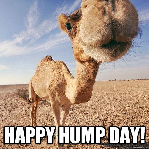 Happy hump day Hump Day Meme