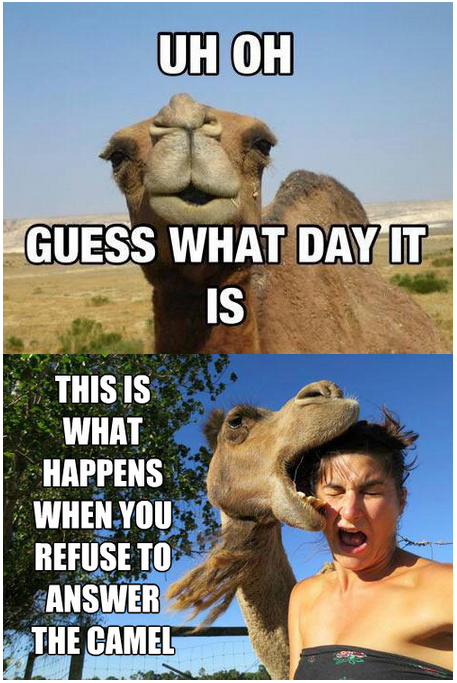 Hump Day Meme Uh Oh Guess what day it is this is what happens