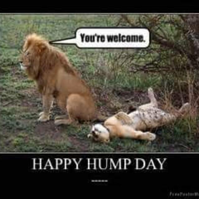 Hump Day Work Meme Happy hump day.