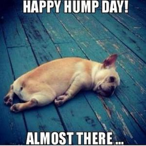 Hump Day Work Meme happy hump day almost there