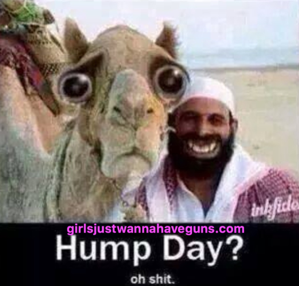 Hump day oh shit Hump Day Work Memes