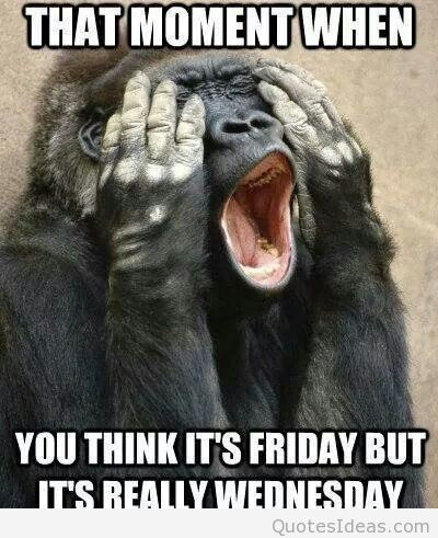 That moment when you think it's friday but its really wednesday Hump Day Meme