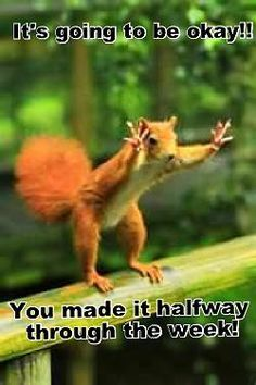 it's going to be okay you made it halfway Hump Day Work Meme