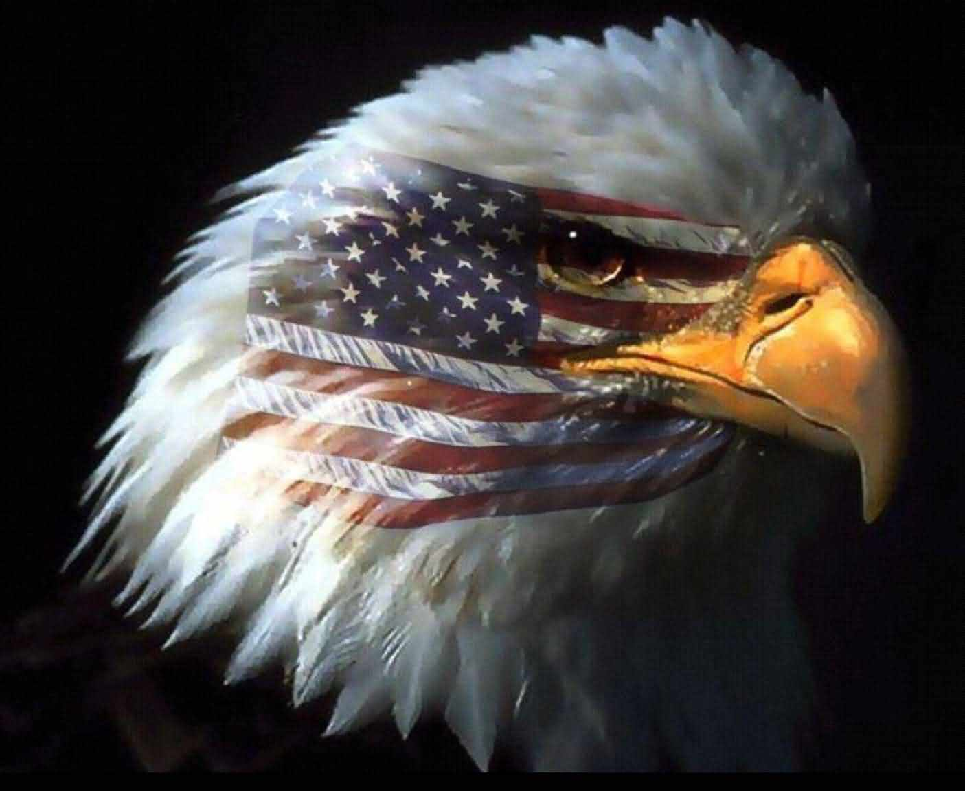American Eagle Day Best Wishes Wallpaper