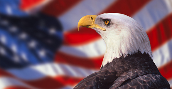 Best Wishes Happy National American Eagle Day Greetings Message