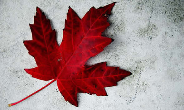 Happy Canada Day Maple Leaf Wallpaper
