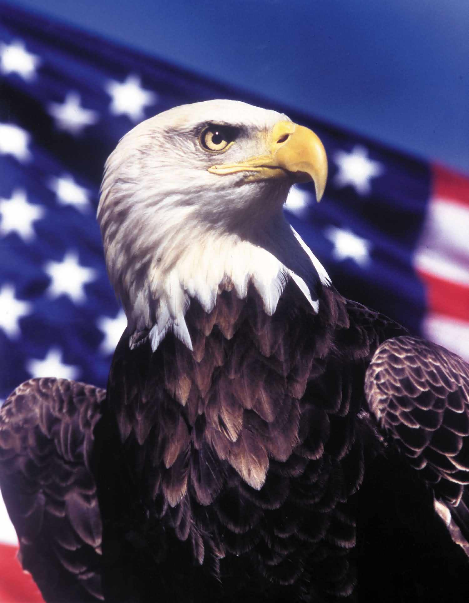 Wish You Happy American Eagle Day Greetings Wallpaper