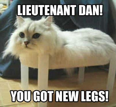 Cat Meme